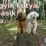 Egyik kutya másik eb