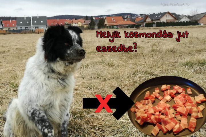Kutyából nem lesz szalonna