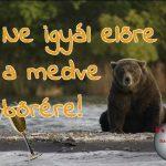 Előre iszik a medve bőrére