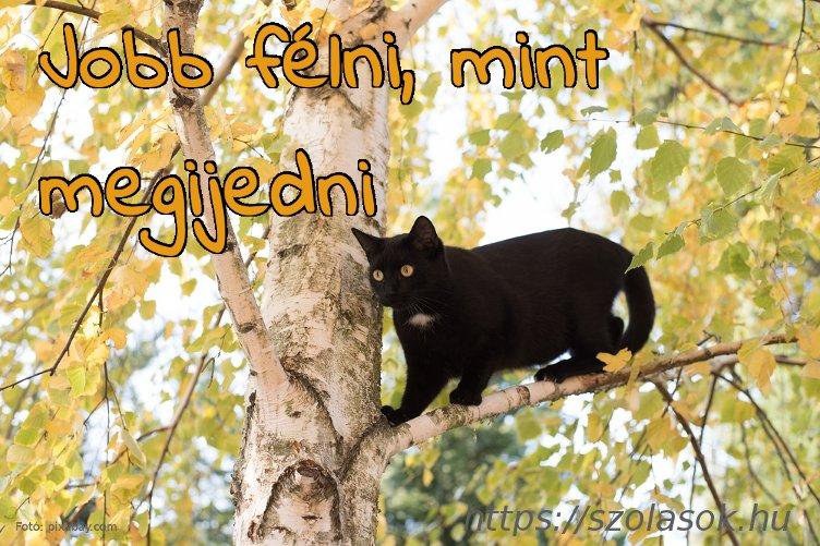 Jobb félni, mint megijedni: A cicus épp a fán kerüli el a bajt...