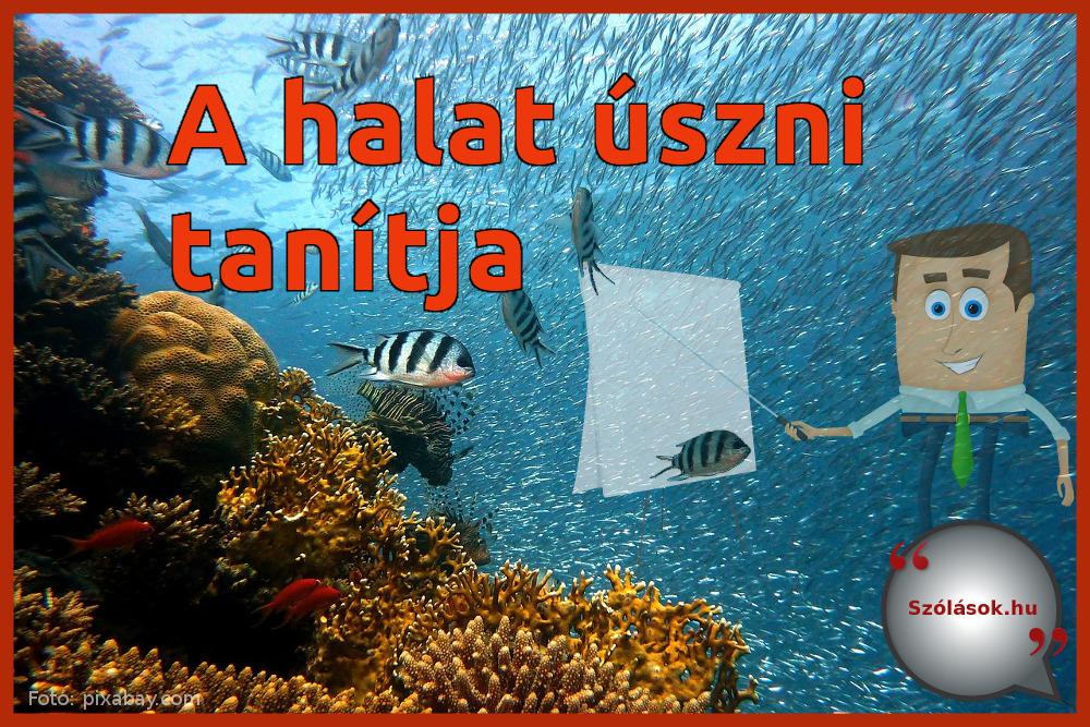 A halat úszni tanítja szólás