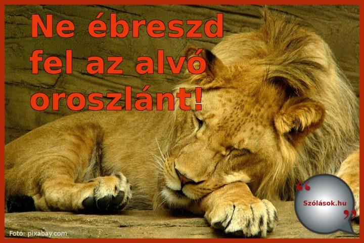 Ne ébreszd fel az alvó oroszlánt!