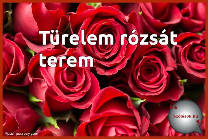 Türelem rózsát terem