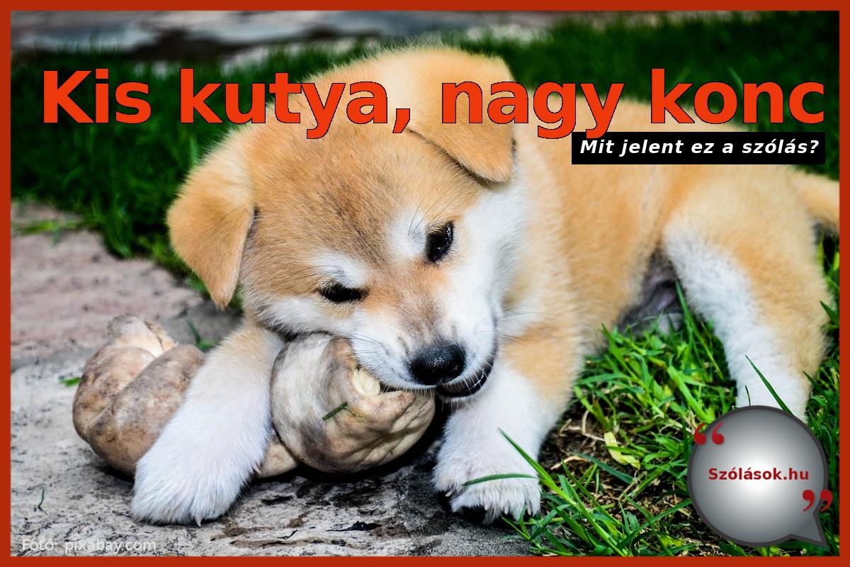 Kis kutya nagy konc