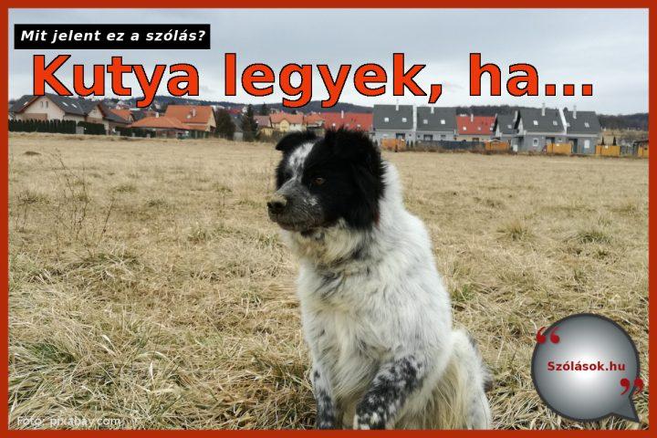 Kutya legyek, ha...
