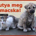 Kutya meg a macska!