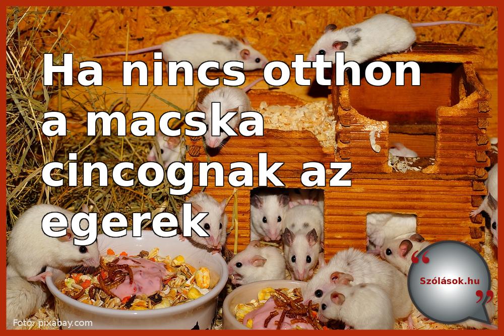 Ha nincs otthon a macska, cincognak az egerek