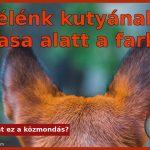 Félénk kutyának hasa alatt a farka
