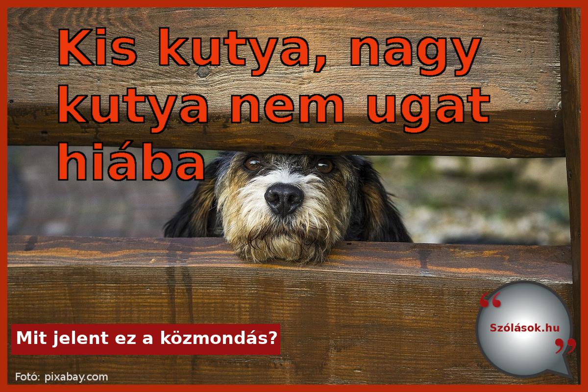 Kis kutya, nagy kutya nem ugat hiába