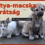 Kutya-macska barátság