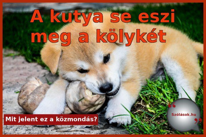 A kutya se eszi meg a kölykét