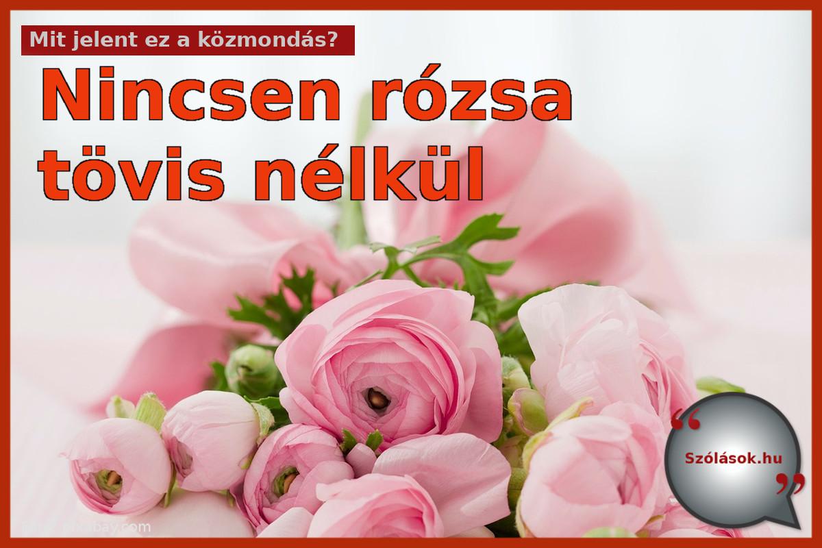 Nincsen rózsa tövis nélkül