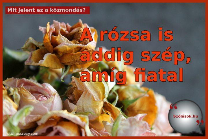 A rózsa is addig szép, amíg fiatal jelentése